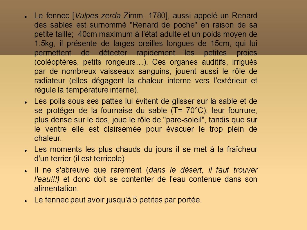 Le fennec [Vulpes zerda Zimm